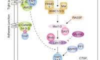 Cell:YAP/TAZ是怎样在癌症耐药性中发挥作用的呢?