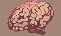 """Nature 子刊:重新激活""""瘫痪""""的免疫系统,向致命脑癌发起攻击"""