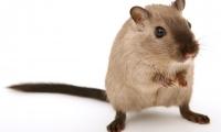 """攻克""""癌症之王"""",科学家们找到了新方法,小鼠100%存活 !"""