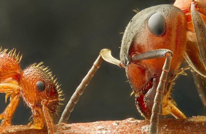 2012尼康微观世界摄影作品精选a-图库-生物探索