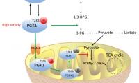 Nature子刊:浙大易文组揭示肿瘤生长新机制:代谢酶PGK1糖基化修饰促癌