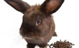 为什么动物喜欢吃便便?