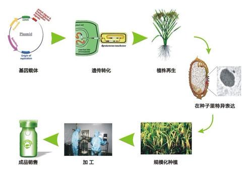 武汉禾元自主创新研发植物生物反应器技术平台