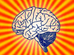 人类大脑皮层新鉴定出75种不同细胞类型