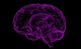"""脑瘤福音!Nature:""""改造""""T细胞,使其进入大脑、攻击""""逃逸""""的癌细胞"""