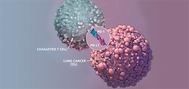 "Science:让PD-1靶向疗法更有效的""燃料"""