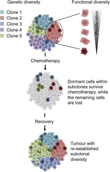 cell干细胞综述:癌症干细胞模型的更替