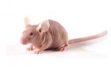 研究表明 TCF21能抑制肺癌细胞的裸鼠成瘤能力
