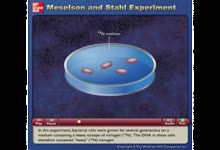 Meselson and Stahl Experiment-Meselson和Stahl证明DNA半保留复制的实验