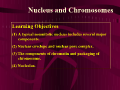 Nucleus and Chromosomes