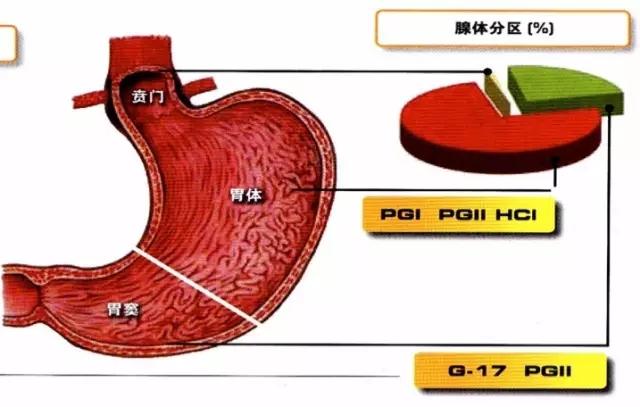 胃部是我们人体十分重要的、不可或缺的一部分系统器官,想必大家对于胃癌都不陌生吧。 数据显示,中国胃癌发病率与死亡率均居恶性肿瘤第二位,平均每三分钟,就有一名中国人死于胃癌!!! 中国胃癌高发部分是胃窦部 虽然早期胃癌70%以上无明显症状,但是胃癌是可以提早发现的!!! 比较遗憾的是目前我国的早期胃癌发现率仅有10%。 除了胃镜,中国亟需早期、有效的胃癌筛查方案。 现阶段,胃癌早期发现有新方法,这项体检技术,能让我国胃癌筛查率突破10%!!! 上海地方媒体的新闻报道 上海地方媒体的新闻报道 广东地方媒体的新