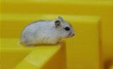 小鼠迷宫实验技术专题