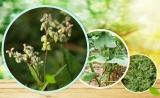 聚焦 | 安诺合作的植物Hi-C文章见刊了~