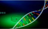CRISPR/Cas9專利歐洲戰場:張鋒團隊一項核心專利遭撤回