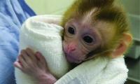 Science:儿童癌症患者的生育能力有救了,动物实验已成功生下健康后代
