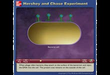 Hershey and Chase Experiment-Hershey和Chase证明DNA是遗传物质的实验