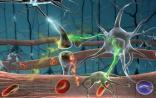 Cell:帕金森起源又遭挑战 可能是自体免疫疾病