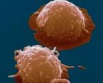 干细胞组图