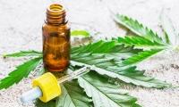 科学家用基因工程酵母生产大麻主要成分:高质量低成本更环保