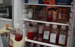 细胞原代培养和传代培养实验服务