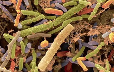 PNAS:这个来自肠道细菌的化合物虽不能让你更长寿,但或能让你活得更健康