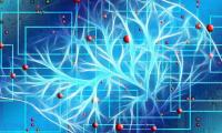 悉尼科技大学:健身营养品可能会损伤大脑健康