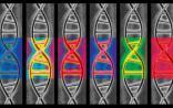 大规模并行基因组测序技术(MPGS)在NIPT中的应用