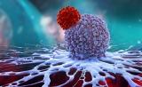 """大牛Carl June参与发表最新论文:CAR-T治疗实体瘤""""人体试验""""结果公布,有两大障碍需克服"""