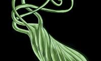 BMJ子刊:胃癌早期诊断新福音——易感标志物的确定