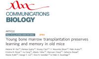 新发现!年轻骨髓可以使衰老小鼠恢复大脑活力