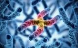 "Cell新发现:意料不到的保护""裸露""基因组的RNA"