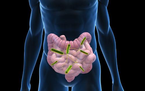 Science:肠道菌群失衡可致全身免疫系统过度活跃