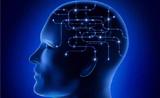 """大脑连接组研究新方法——药物""""开关""""特定脑区"""