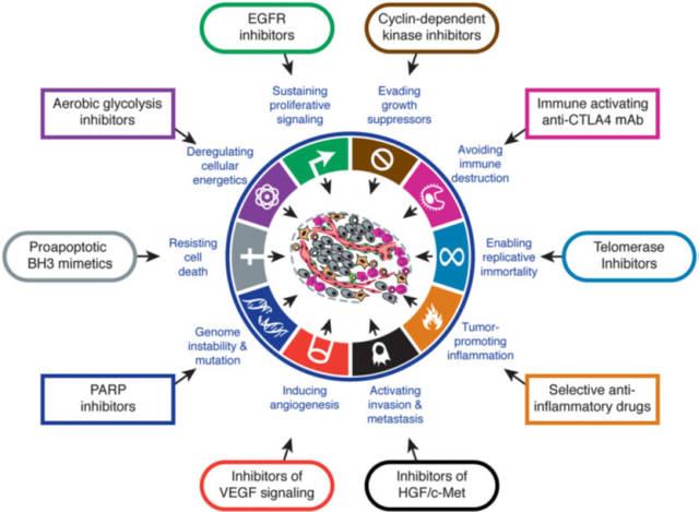 细胞总蛋白提取步骤