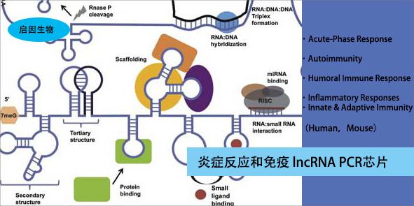 ncrna pcr芯片(