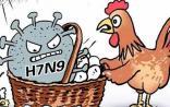 H7N9禽流感疫情上升势头已经得到遏制