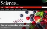 Science子刊:多吃红色浆果,有望降低炎症风险?