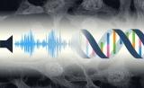 有趣!PLOS ONE:声音还会影响基因工作