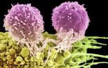 Nature发布癌症转移研究重大突破