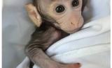 【冷泉港亚洲】专访仇子龙:让猴子帮我们探索自闭症
