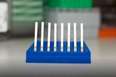 1小时出结果!张锋团队发布新冠病毒CRISPR检测技术