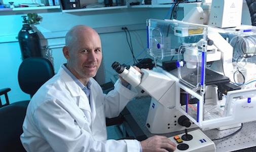 """Nature:科学家发现减少炎症新机制,两关键蛋白是""""免疫守门人"""""""