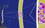 意外!Science:人到中年,超一半食道细胞携带基因突变
