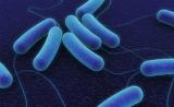 "Science:揭秘细菌的""嗅觉机制""有哪些用处?"
