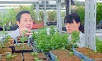 上海科学家:青蒿素有望成为降血脂、抗肿瘤新药