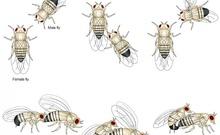 饶毅教授在果蝇求偶的分子机制研究上取得新成果