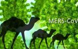 Science:科学家揭示新型的MERS冠状病毒