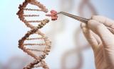 Science:德国默克使CRISPR专利战再起波澜