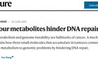 一探究竟!Nature:腫瘤代謝物如何阻礙DNA修復