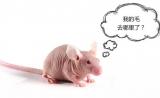 实验动物科研班的那些鼠宝们